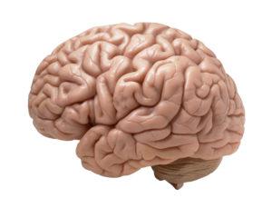 Простые техники йоги для развития мозга йога