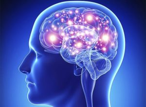 Функции и виды анализаторов в психологии